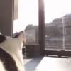 オリハラフォト猫店長ライブカメラ(埼玉県長瀞町長瀞)