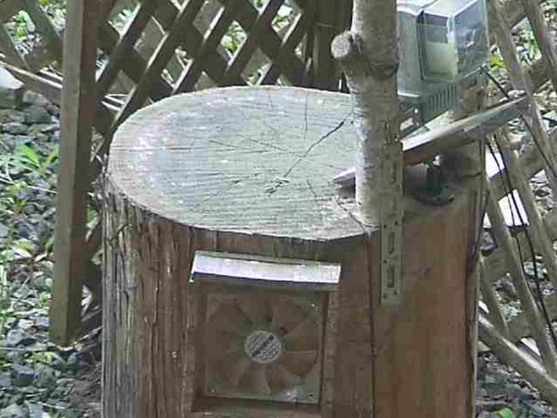 檜原村野鳥餌やりライブカメラ(東京都檜原村)