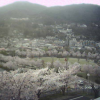 城山公園ライブカメラ(長野県長野市箱清水)