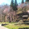 伝行山徹然桜ライブカメラ(長野県白馬村北城)