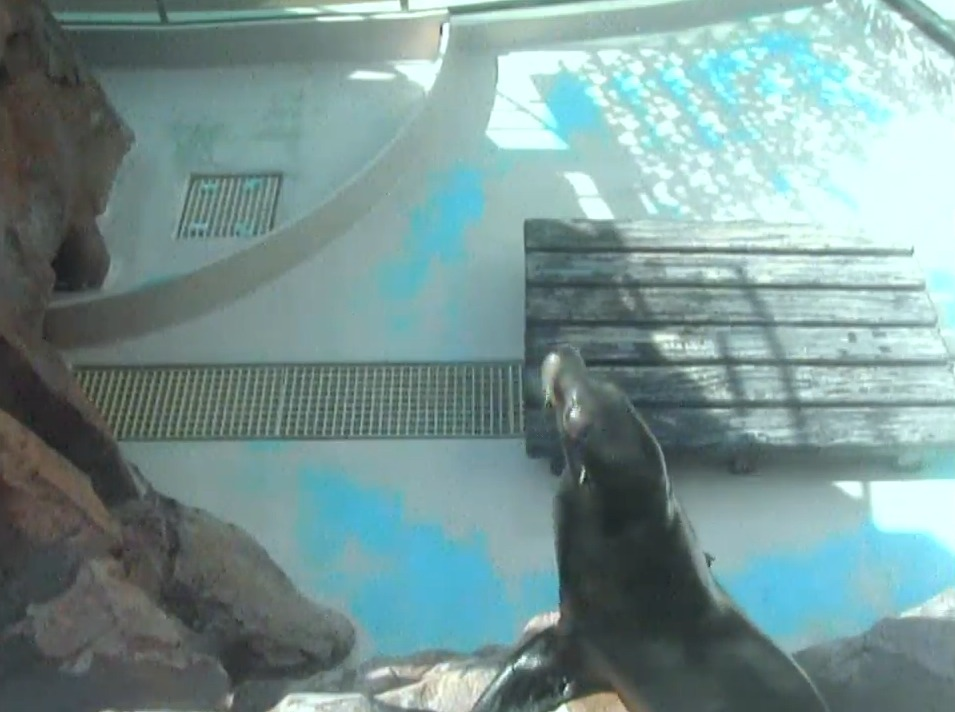 サンシャイン水族館アシカたちの砂浜ライブカメラ(東京都豊島区東池袋)