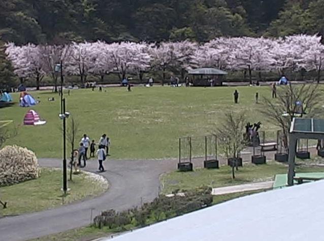 神奈川県立あいかわ公園からふれあい広場・子供広場・ふわふわドーム・中央広場・花の斜面・工芸工房村・バラ園・桜