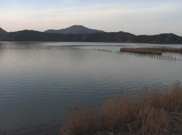 三方湖の水鳥