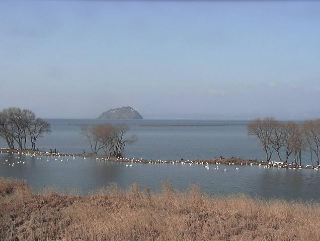 琵琶湖の水鳥