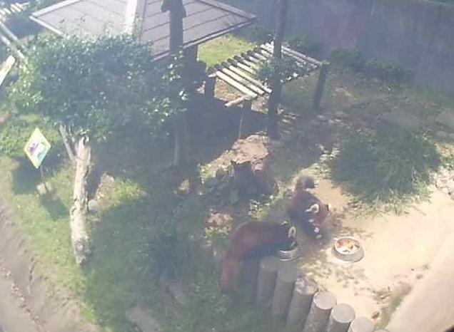 鯖江市西山動物園レッサーパンダ屋外展示場