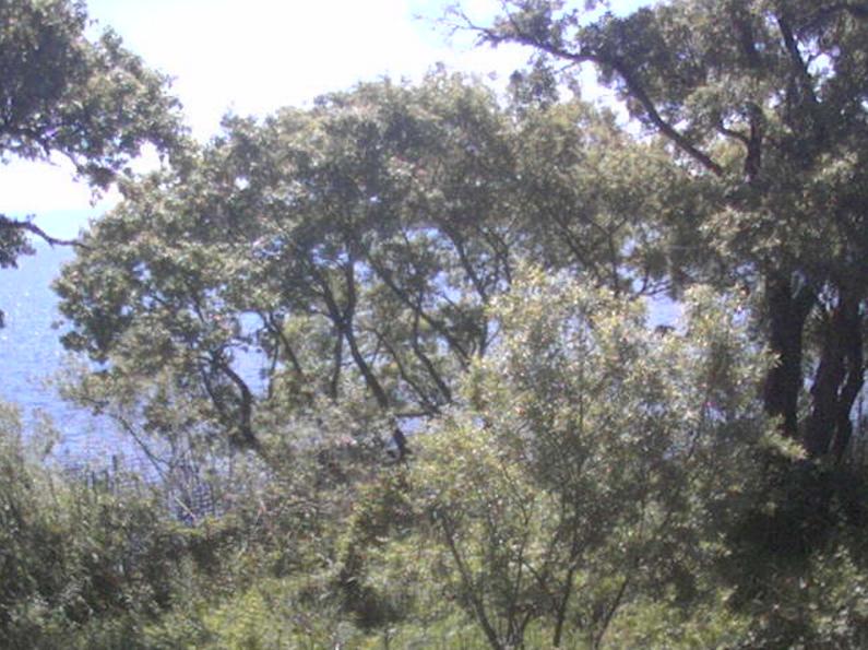 高島市新旭水鳥観察センターライブカメラ(滋賀県高島市新旭町)