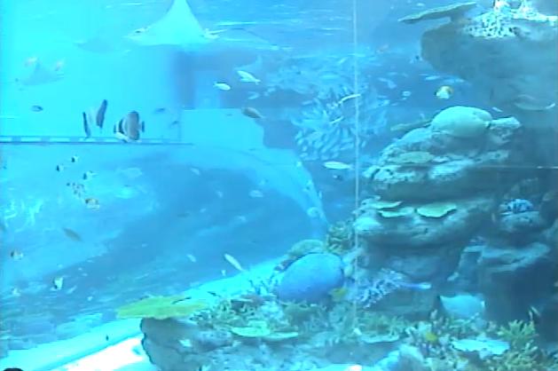 名古屋港水族館サンゴ礁大水槽