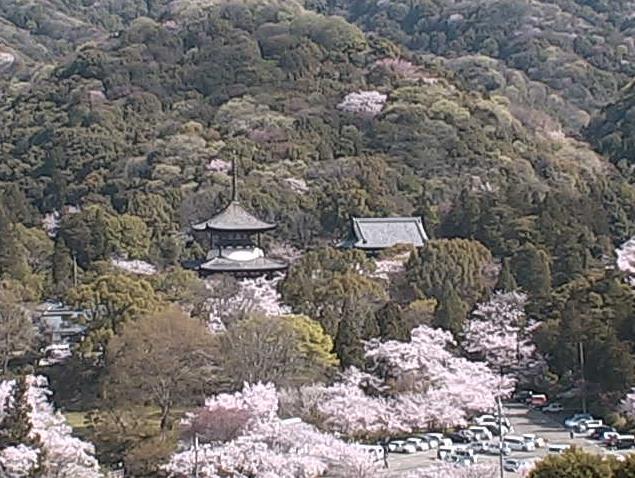 根来寺の景観・桜