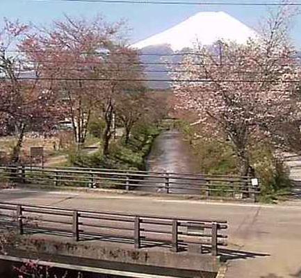 お宮橋から富士山・桜並木・ソメイヨシノ