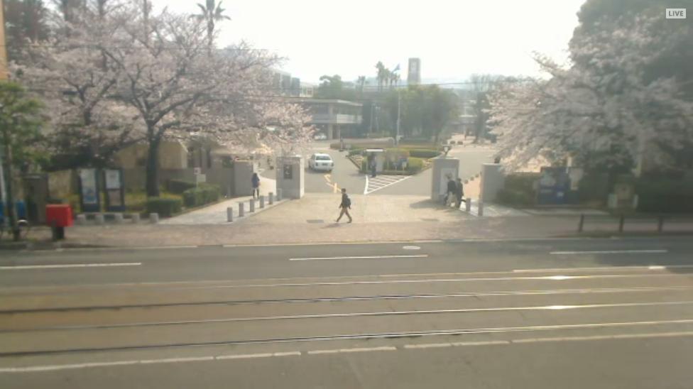 長崎大学正門の桜