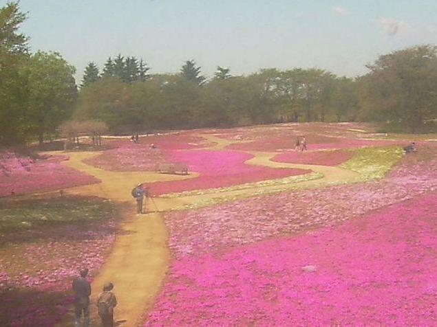 東武トレジャーガーデンから芝桜ガーデン