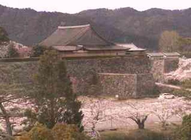 篠山城跡の桜