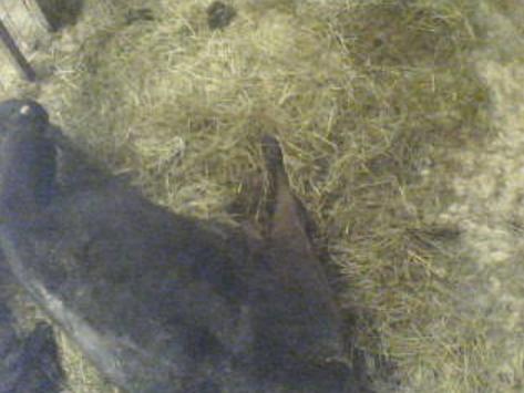 木下牧場子牛牛舎