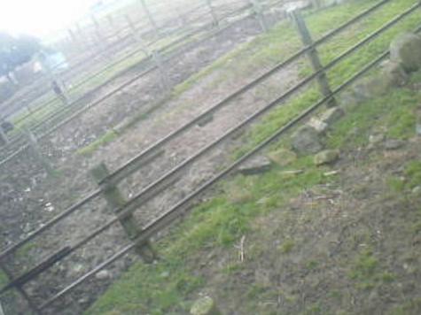 木下牧場から近江牛放牧場