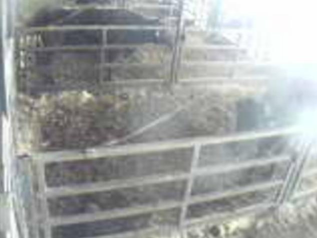 後藤牧場牛舎