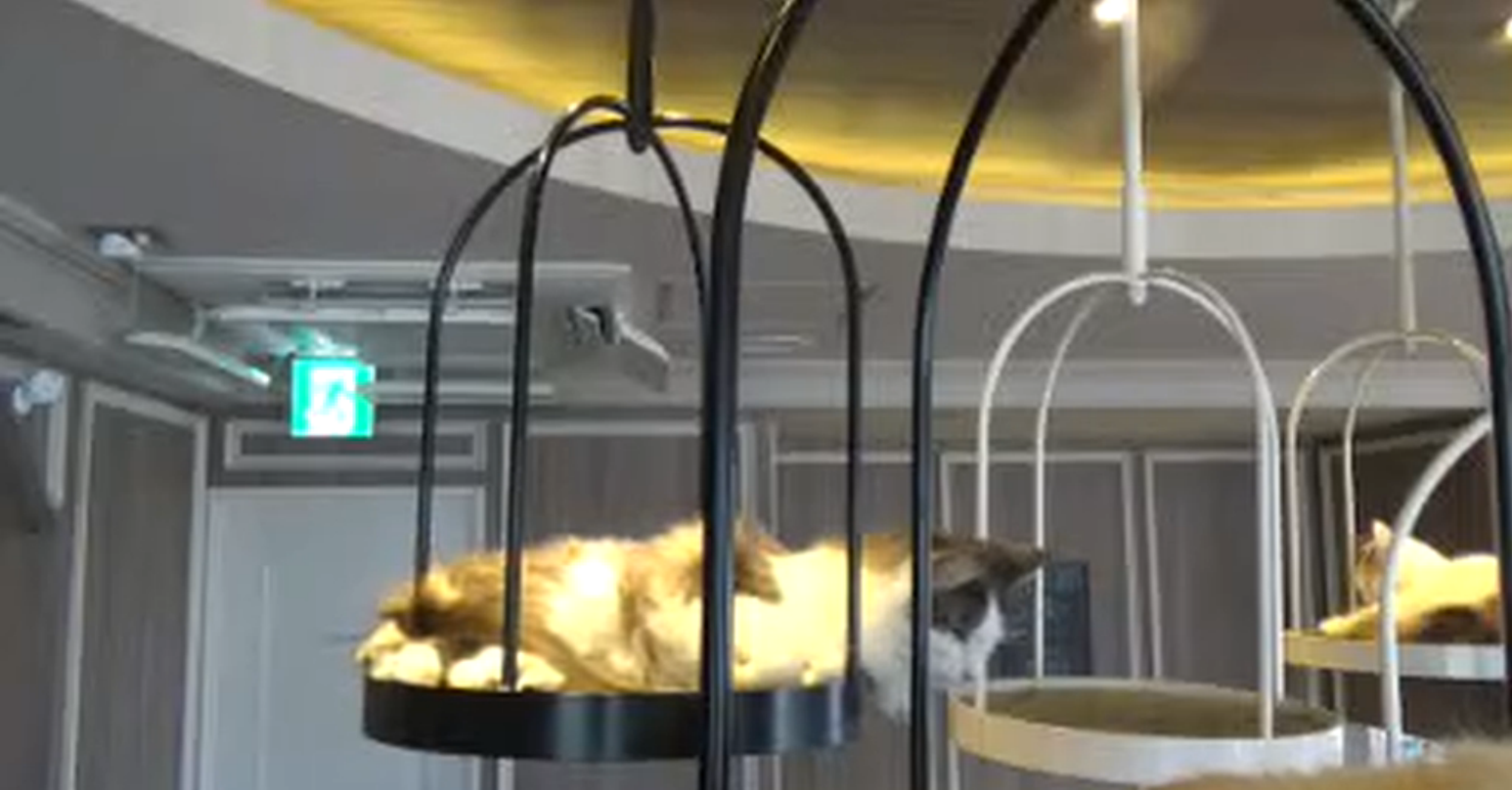 猫カフェMoCHA(モカ)渋谷店