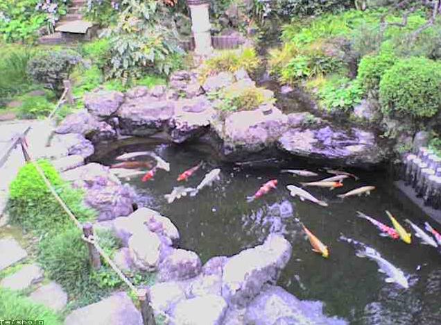 貞昌院の池