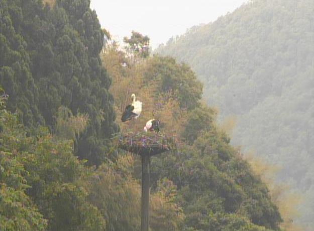 ハチゴロウの戸島湿地ライブカメラ(兵庫県豊岡市城崎町)