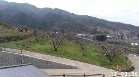 花鳥山一本杉公園(花鳥山展望台)から展望台付近桃畑