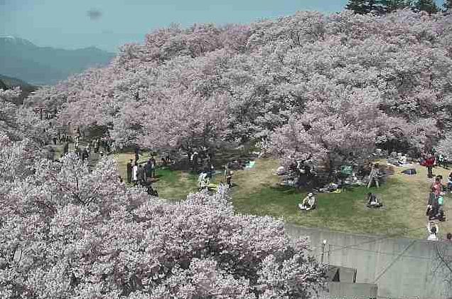 高遠城址公園から信州高遠美術館前・桜