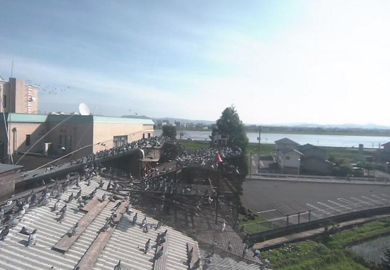 インターナショナルロフトの会鳩舎東向きライブカメラ(広島県福山市水吞町)