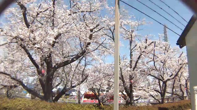 大口町五条川桜並木ライブカメラ(愛知県大口町下小口)