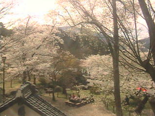 臥竜公園桜並木