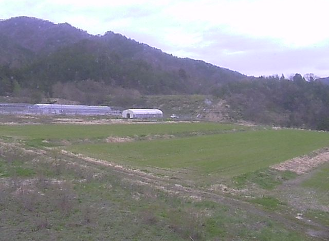 代山ブルーベリー畑