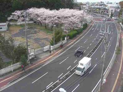 明倫小学校前から三重県道32号伊勢磯部線・桜