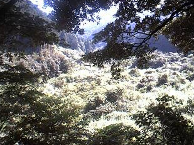 宇美川昭和の森ライブカメラは、福岡県宇美町宇美の昭和の森に設置された宇美川が見えるライブカメラです。