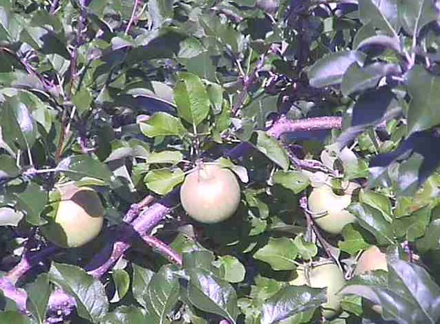 かねさく果樹園ライブカメラは、秋田県横手市平鹿町のかねさく果樹園に設置されたまぐらりんご・保呂羽山・果樹園・直売所・駐車場が見えるライブカメラです。