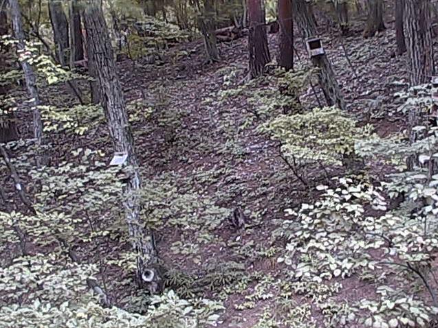 福島市小鳥の森ライブカメラは、福島県福島市山口の福島市小鳥の森に設置された小鳥(アオゲラ・シジュウカラ・ヤマガラ・キビタキ・サンコウチョウ・ツグミ・ジョウビタキ)が見えるライブカメラです。