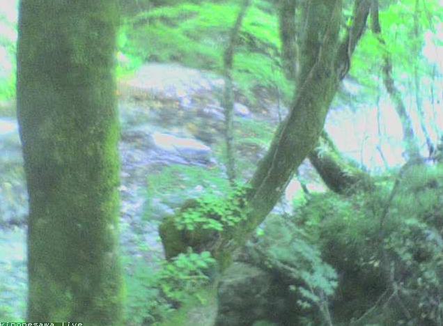 ブナの実湯ノ小屋第3ライブカメラは、群馬県みなかみ町藤原のブナの実湯ノ小屋に設置された木ノ根沢清流が見えるライブカメラです。