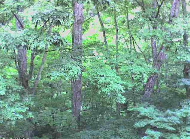 ブナの実湯ノ小屋第2ライブカメラは、群馬県みなかみ町藤原のブナの実湯ノ小屋に設置された木ノ根沢方面が見えるライブカメラです。