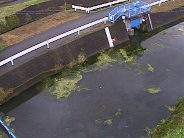 柳河原川柳河原川放水路ライブカメラは、宮崎県都城市花繰町の柳河原川放水路に設置された柳河原川が見えるライブカメラです。