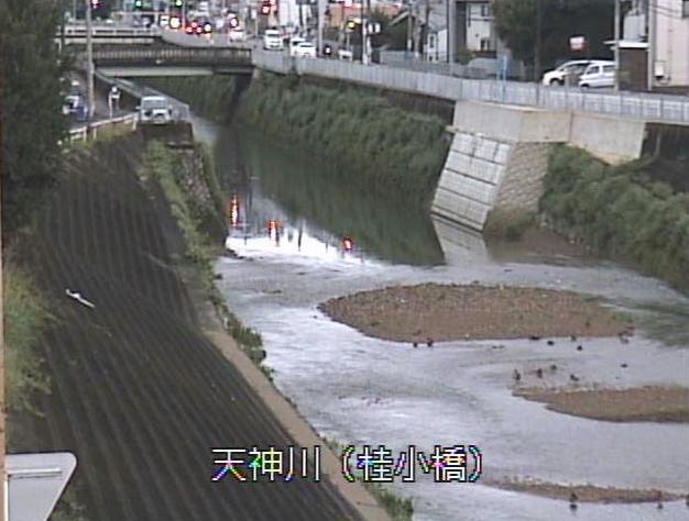 天神川桂小橋ライブカメラは、京都府京都市右京区の桂小橋に設置された天神川が見えるライブカメラです。