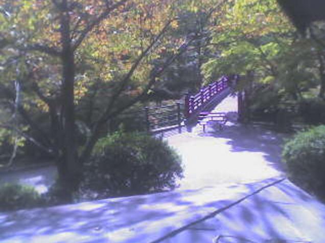 弥彦公園もみじ谷観月橋ライブカメラは、新潟県弥彦村弥彦の弥彦公園に設置されたもみじ谷観月橋付近が見えるライブカメラです。