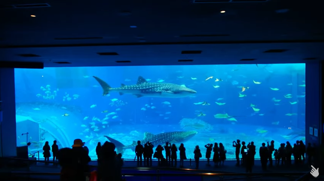 沖縄美ら海水族館黒潮の海ライブカメラ(沖縄県本部町石川)