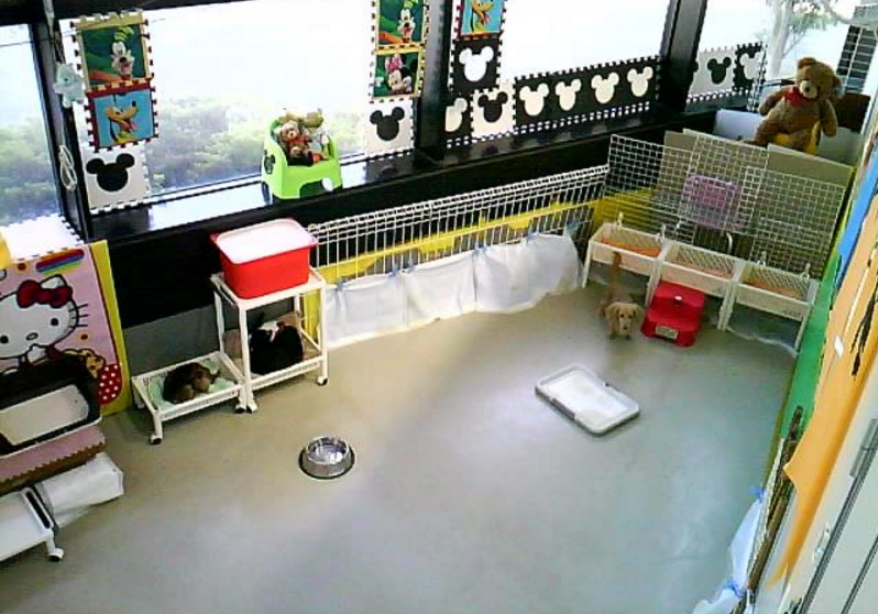 わんわんコインランドリー柏店第1ライブカメラは、千葉県柏市塚崎のわんわんコインランドリー柏店(わんわん柏)に設置された店内が見えるライブカメラです。