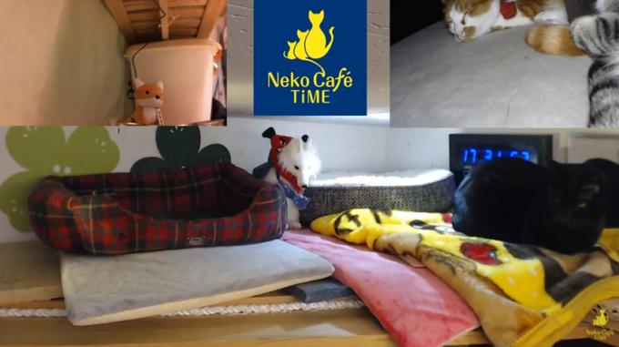 猫カフェタイムライブカメラ(京都府京都市伏見区)