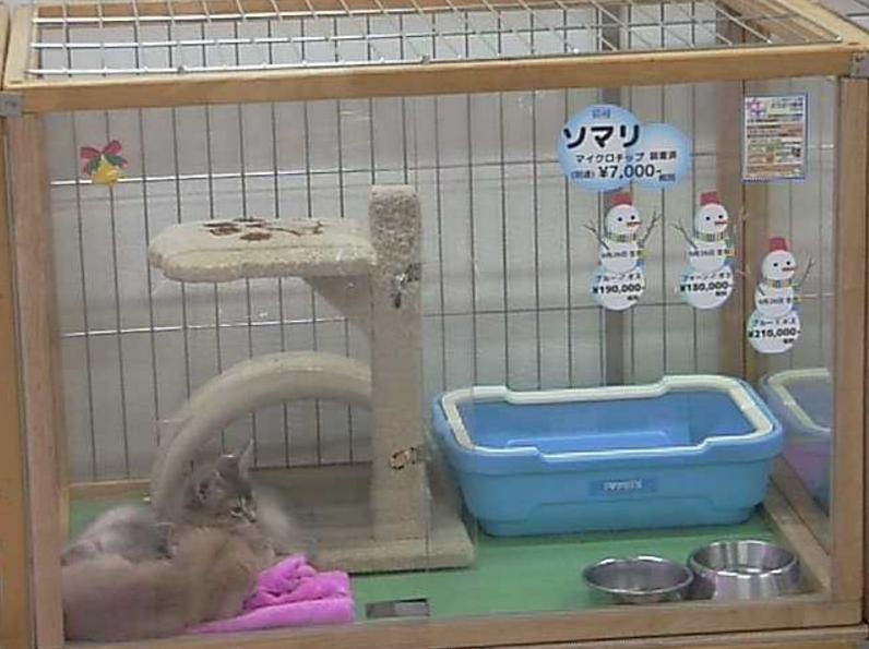 大阪市北区のペットショップ、ペット用品一覧 16 …