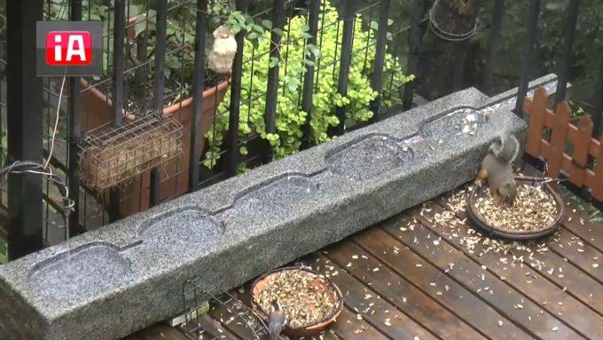 軽井沢三笠の森ライブカメラ(長野県軽井沢町軽井沢)