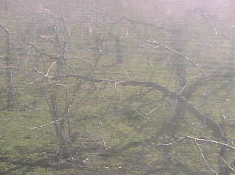 乗田園りんご農園ライブカメラ(青森県黒石市)