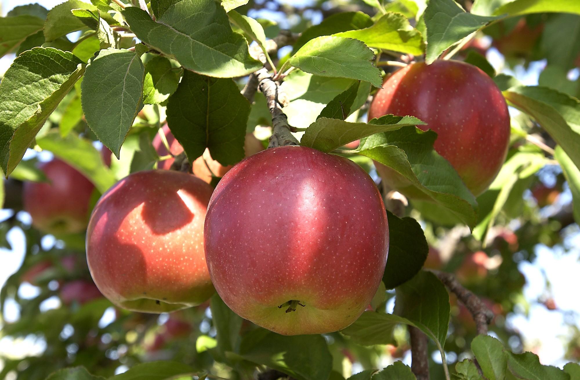 りんごライブカメラ