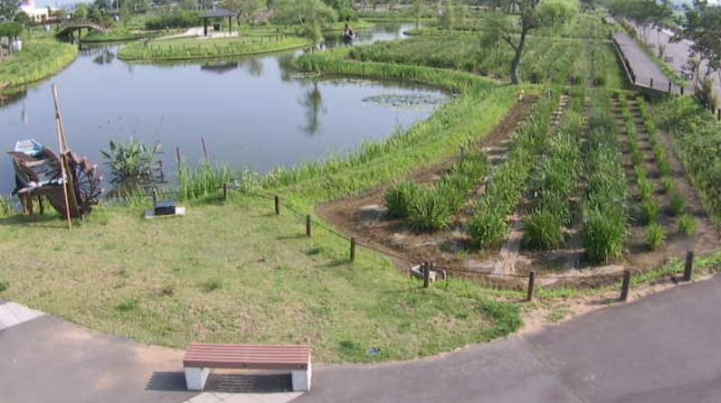 水郷佐原あやめパーク第2ライブカメラ(千葉県香取市扇島)