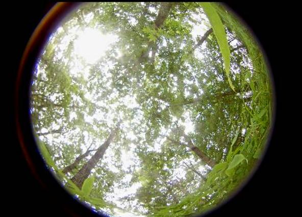 五洋建設那須技術研究所ビオトープ第2ライブカメラ(栃木県那須塩原市四区町)