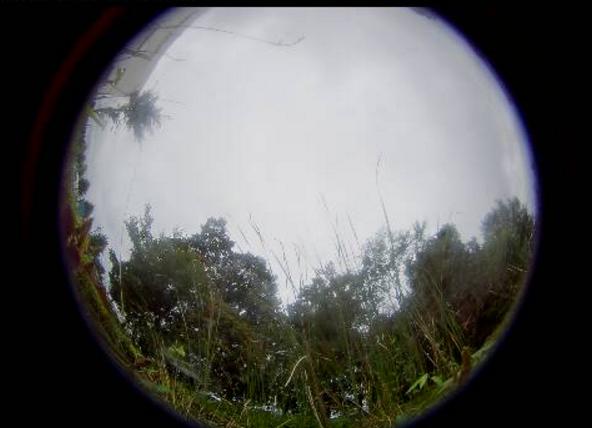 五洋建設那須技術研究所ビオトープ第1ライブカメラ(栃木県那須塩原市四区町)