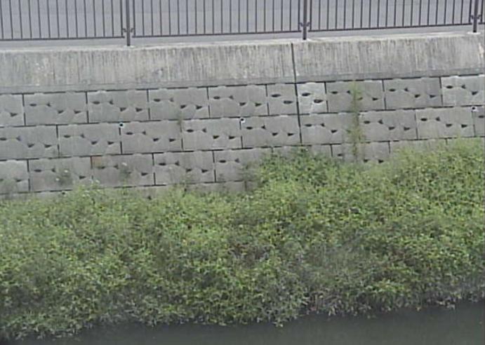 水場川横井公園ライブカメラ(愛知県名古屋市西区)