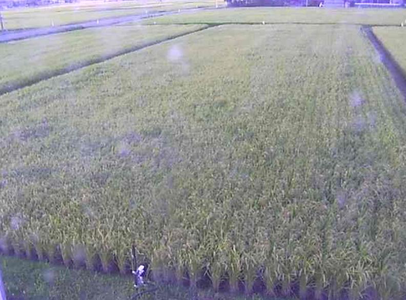 岩手ふるさと農業協同組合ライブカメラ(岩手県奥州市胆沢区)