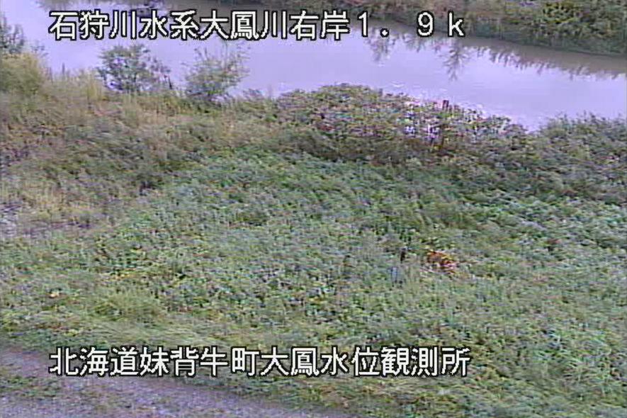 大鳳川大鳳橋水位観測所ライブカメラ(北海道妹背牛町大鳳)